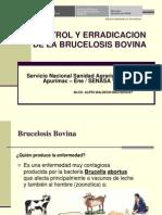 Charla Brucelosis y TBC1.pdf