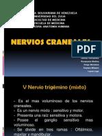 Presentación expo anatomia. pares (1).pptx