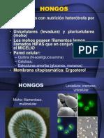 Hongos y Virus