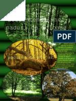 Ecosistemul Unei Paduri de Foioase