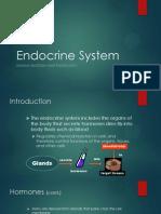 Endocrine System Report (ANATOMY)