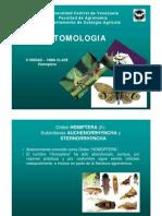 Entomologia - II Unidad - Clase Homopteraa