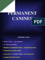 Maxillary & Mandibular Canines