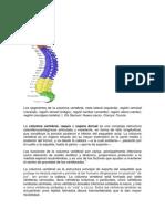 Columna vertebral.docx