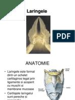 Laringe-curs ORL