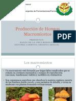 Producción de Hongos Macromicetos