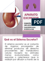 Aparato Excretor Anato Animal
