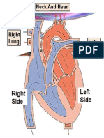 Myocardial Ischemia Disease