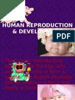 Human Reproduction & Development