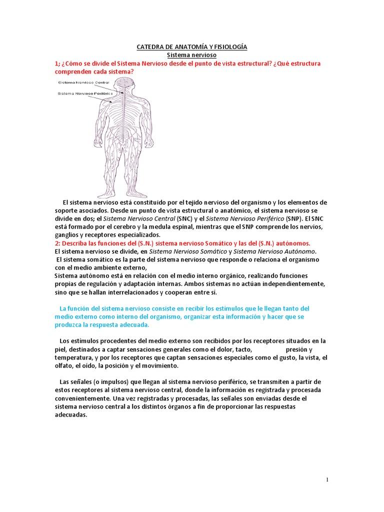 Asombroso Anatomía Y Fisiología De Medio Término Respuestas ...