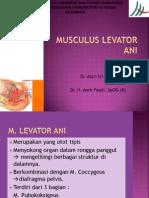 m.levator Ani 22052014