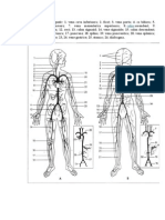Sistemul Arterial Si Cel Venos