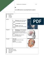 Sistema Muscular Cabeza Cuello Tronco