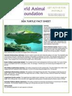WAF-Sea Turtle Fact Sheet