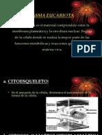 Citoplasma- 3 de Sec