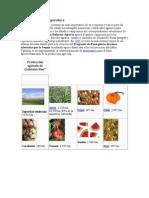 Quintana Roo y Su Agricultura