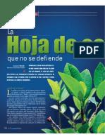 coca_pp29