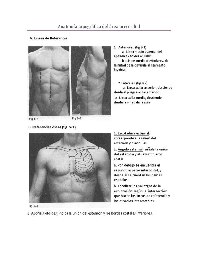 Anatomía Topográfica Del Área Precordial