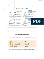 Tema 1 Síntesis de Proteínes