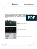 Lista Organismos Plancton