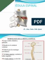 Clase 9 Medula Espinal
