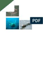 Diferentes Animales Acuaticos