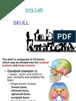 01_20131119 Skull I