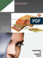 anatomi Kulit Kardinah