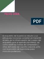 Exponer Pelvis
