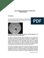 GUIAS DR. BASTO Hemorragia Subaracnoidea Guia Estudiantes 1