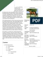 Arabian Horse - Wikipedia, The Free Encyclopedia