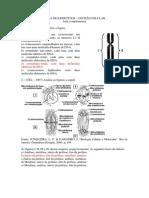 Exercciosdivisocelular 70questoes Respondida 120829210802 Phpapp02