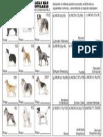 razas-perrosMCM.2014