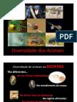 Diversidade Dos Animais