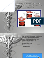 Adaptaciones Celulares Lesion Celular y Muerte Celular