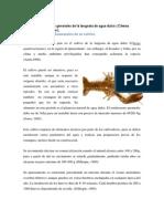 Características Generales de La Langosta de Agua Dulce