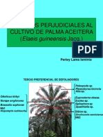 1.Plagas Palma