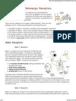 Physiology of Adrenergic Receptors