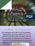 EL CROMOSOMA 5