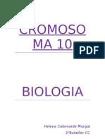 CROMOSOMA 10