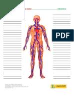 Treffpunktberuf Pflege-kreislauf Wortschatzliste