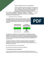 Xpl Polarizador y Analizador Con Luz Convergente