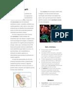 Reino Monera.pdf