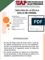 Fisiología de La Célula - CICLO de KREBS