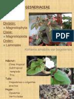 Gesneriacia & Gentiliacia