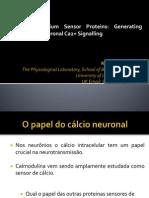 Apresentação - Cálcio Neuronal.