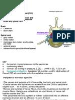 Autonomic nervous system 24_2