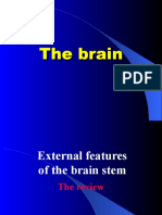 The Internal structures of brain stem