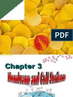 07-3-11membrane structure