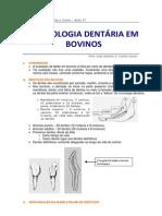 Aula 17 - Cronologia Dentária de Bovinos